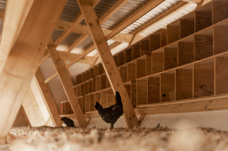 house-of-chickens-by-so-architecture-_dezeen_2364_col_8